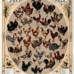 poultryoftheworld
